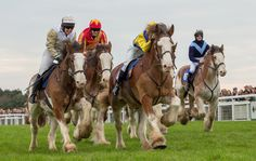 Watch Clydesdales and Dartmoor hill ponies showcasing their speed during a special race meeting at Exeter racecourse [VIDEO] - Horse & Hound Funny Horse Pictures, Funny Horses, Martin Clunes, Clydesdale Horses, Horse Videos, Dartmoor, Draft Horses, Exeter, Uk News