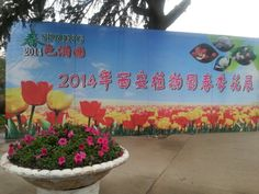 Spring has sprung/is springing around Xian - Xian Botanical gardens