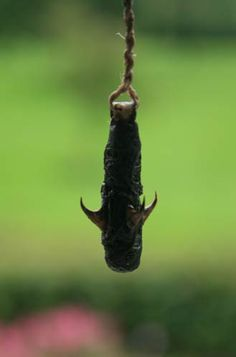 Use a whittled sharp stick or a thorn as a fishing hook.