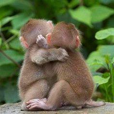 #cute #adorable #animals