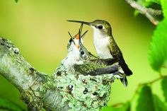 We love our hummingbirds!