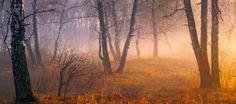 ***Misty morning by Marat Akhmetvaleev (South Urals, Russia)