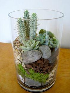 passende terrarium pflanzen gefäß steinchen und moos