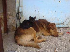 В Туле гаражная собака воспитывает котёнка