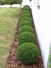 Resultado de imagem para jardins com buxinhos e pedras