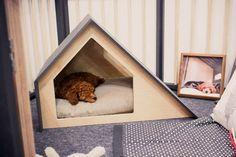 Lit et niche pour chien design – 3 modèles contemporains pour votre ami quadrupède