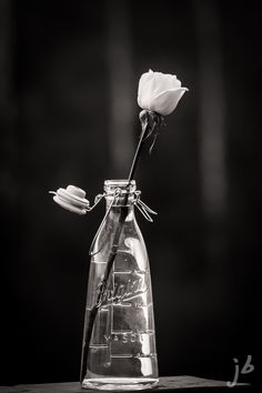 B&W Rose Black White Photos, Black And Grey, Black And White Photography, Black Swan, White Roses, Black And White Flowers, White Background Quotes, Black And White Background, Dark Shades