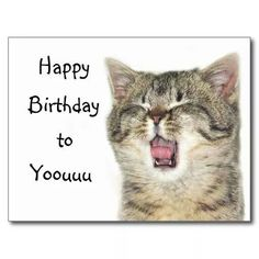 Shop Happy Birthday kitten Postcard created by Personalize it with photos & text or purchase as is! Happy Birthday Kitten, Cat Birthday Wishes, Singing Happy Birthday, Happy Birthday Messages, Happy Birthday Quotes, Birthday Fun, Birthday Memes, Birthday Cat Funny, Birthday Kitty