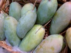 Green Mango Food Cravings, Eggplant, Mango, Potatoes, Fruit, Vegetables, Green, Manga, Potato