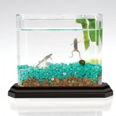 Self-contained Frog Ecosphere