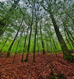 Reaching out . Forest in the Eifel (Germany) . #ig_countryside #rural_love #wms_germany #bestgermanypics #super_europe #ok_europe #ig_discover_europe #4u2c_natureshotz  #loves_united_germany #loves_united_trees #tree_captures #ig_discover_nature #ic_trees #fiftyshades_of_nature #uwn_holland #meindeutschland #travel_2_germany #ig_deutschland #tree_magic #treelover #traumpfade #besthikeever #germany_insta #germanypics #igersgermanyofficial #welivetoexplore #deutschland_greatshots…
