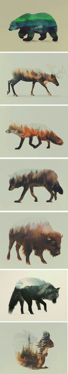 Norwegian visual artist Andreas Lie merges verdant landscapes and photographs of animals to creates subtle double exposure portraits. Snowy mountain peaks and thick forests become the shaggy fur of wolves and foxes, and even the northern lights appear thr Draw Realistic, Fuchs Illustration, Photoshop, Pet Portraits, Drawing Portraits, Art Graphique, Art Plastique, Double Exposure, Belle Photo