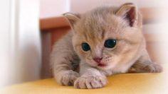 CAT WALLPAPER - (#86516) - HD Wallpapers - [WallpapersInHQ.com]