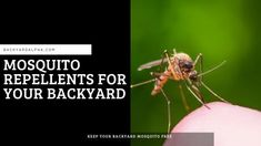 Mosquito Repellent For Your Backyard. Learn how to keep mosquitoes out of your yard, which smells they hate and how to kill them. DIY Natural Homemade Best Sprays   #mosquitorepellent  #diy  #homemade  #Best  #sprays  #natural Best Mosquito Repellent, Mosquito Larvae, Mosquito Control, Water Gardens, Mosquitoes, Ponds, Backyards, Sprays, Hate