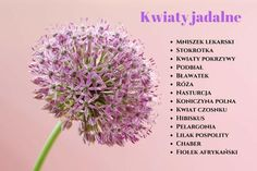 Które kwiaty są jadalne? Edible Flowers, Helpful Hints, Dandelion, Cabbage, Spices, Food And Drink, Hair Beauty, Herbs, Vegetables