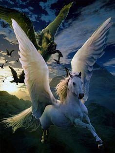 White shepherd by *sasha-fantom on deviantART