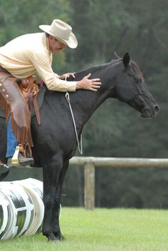 Pat Parelli Understand horse behavior and emotions