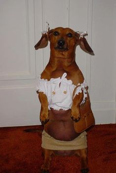 Do you not think that dachshund pups are just the greatest pups in history? I mean c'mon they're long, tiny, silly, funny, cute and cuddly all at the same time! Funny Animal Pictures, Funny Animals, Cute Animals, Hilarious Pictures, Animals Dog, Dog Pictures, School Pictures, Funny Photos, Stupid Pictures