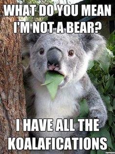 #todaysHumour . . . . #joke #jokes #pun #puns #clever #wordplay #playonwords #playwithwords #funny #funnies #todaysfunnies #fun #jokeoftheday #punoftheday #sillyjokes #humour #humor #humourous #humorous #bear #bears #Koala #koalajoke