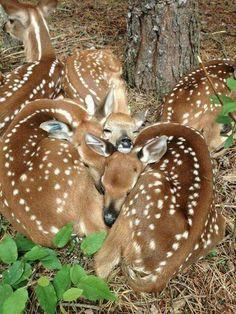 OH! Dear deer! <3