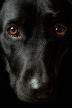 A glimpse into the beautiful soul of a #dog.
