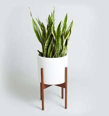 Bilderesultat for hanging plant