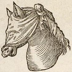 the head of horse with a cloth covering its eyes and face (except the nose and mouth).