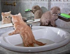 26 Cats and Kittens Pictures