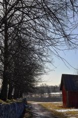 Barn and trees stock photo