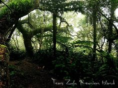 #sashakrauser #hiking #peacefullplace #teamzulu #974✌🏼️🌺🌴#974island #iledelareunion #gotoreunion #ileintense #LaReunion #iledelareunion #ReunionIsland #forest # jungle #nature #naturelovers #islandlife #pentax #montain #primitive #primal #islandvibes #paradise