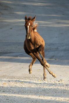 Joyful by hapal  http://www.lightstalking.com/33-magnificent-photographs-of-horses