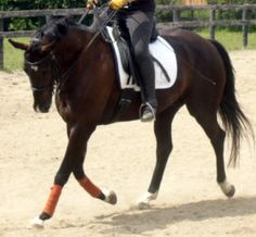 Does your horse pull down on the reins, getting heavier and heavier with every footfall? Does he fall to the forehand, seemingly oblivious to you, the rider, atthe end of the reins? Maybe his leg...