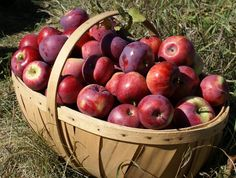 Nothing like delicious, ripe Autumn apples.