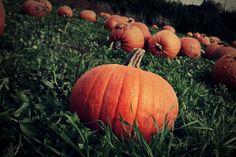 #Pumpkins #Fall2012 Pumpkins, Photography, Photograph, Fotografie, Photoshoot, Pumpkin, Squash, Fotografia