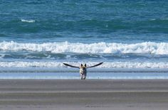 Dog with wings !!! Perfect shot