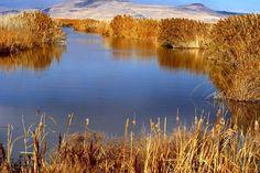 Bear River Bird Refuge, UT