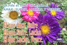 La vida es como una cadena: AMAR, SUFRIR, LUCHAR Y VENCER. El que ama, sufre; el que sufre, lucha y el que lucha, vence