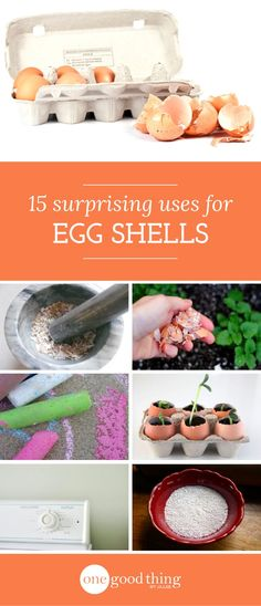 15 Uses for Egg Shells that will surprise you!