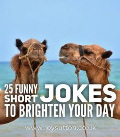 You're in need of a laugh but you have very little time to spare? Then what you need as some funny short jokes. Quick to read by guaranteed to make you smile. Well here are 25 funny short jokes that should brighten your day. Funniest Short Jokes, Short Funny Quotes, Funny Jokes To Tell, Some Funny Jokes, Funny Stuff, Funny Puns, Funny Things, Kid Stuff, Humor