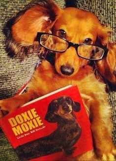 Over 33 million copies sold! #dogs #pets #Dachshunds Facebook.com/sodoggonefunny