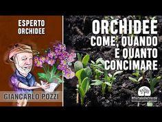 Come, quando e quanto si concima l'orchidea? - YouTube