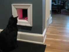 diy cat wall tunnel | Cut a cat tunnel into a closet wall. Hide your litter box inside.