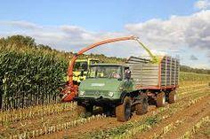 Afbeeldingsresultaat voor maishakselen