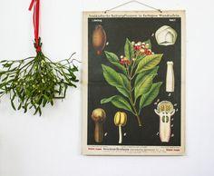 Vintage Educational School Chart, Clove, Botanical Wall Chart Chart on Etsy, $202.09