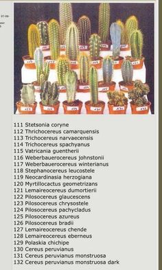 Cactus Names, Succulent Names, Succulent Gardening, Planting Succulents, Planting Flowers, Cactus Identification, Cactus House Plants, Cactus Cactus, Types Of Succulents Plants