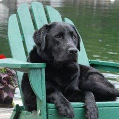 Black Lab….just chillin until he gets in the water…..aaah just heaven.