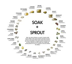 Studies have shown that when we reduce phytic acid in food, we absorb more minerals from that food. Legumes, grains, nuts, and seeds have phytic acid. The phytic acid level varies across these food. How To Make Sprouts, How To Sprout Beans, Phytic Acid, Sprouting Seeds, Sprouting Grains, Cuisine Diverse, Nourishing Traditions, Raw Vegan, Training Tips