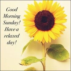 Good Morning Sunday Have A Relaxed Sunday