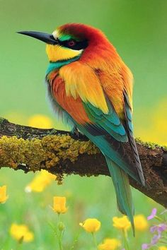 Find and save ideas about Colorful birds, Pretty birds, Beautiful birds and Tropical birds. Pretty Birds, Beautiful Birds, Animals Beautiful, Cute Animals, Beautiful Places, Beautiful Pictures, Pretty Animals, Baby Animals, Animals Amazing