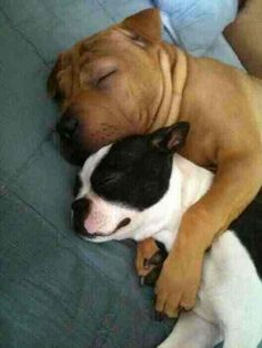 Gaho and Boss ^-^